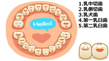 赤ちゃん歯の生え方と時期