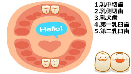 生後9ヶ月あたりから生後10ヶ月あたりまでに、上の前歯(乳中切歯)が生え始めます。