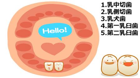 生後6ヶ月あたりから生後9ヶ月あたりまでに、下の前歯(乳中切歯)が生え始めます。