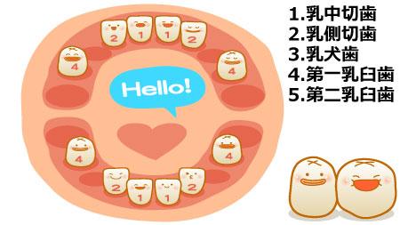 奥歯(第一乳臼歯)
