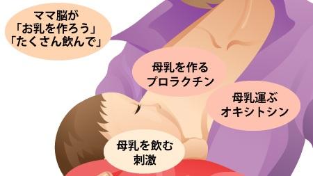 母乳が出る仕組み